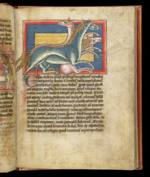 Horses, In A Bestiary f.27r